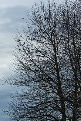 Photograph - Birds Settling Into A Tree Late On A Winter's Afternoon by Belinda Greb