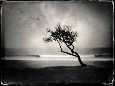 Photograph - Birds, Trees, Beach by John Rodrigues