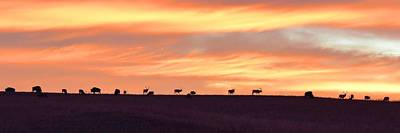 Photograph - Bison Elk Panorama by Keith Stokes