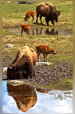 Photograph - Bison Family Portrait T-shirt by Adam Jewell