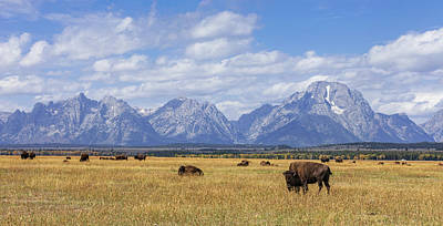 Photograph - Bison In The Tetons by Mark Harrington