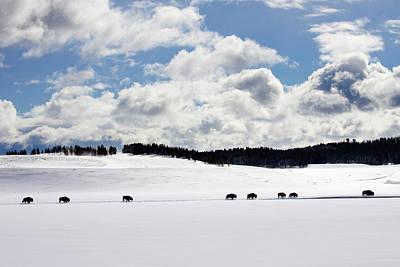 Photograph - Bison Trek Through Snow by Dmathies
