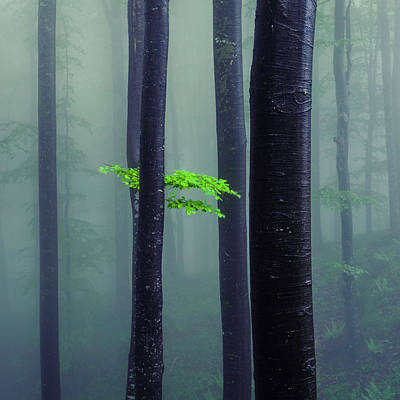 Mountain Royalty-Free and Rights-Managed Images - Bit Of Green by Evgeni Dinev