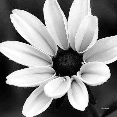 Photograph - Black And White Daisy Flower by Christina Rollo