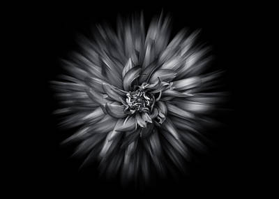 Photograph - Black And White Flower Flow No 5 by Brian Carson