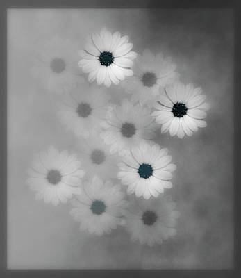 Mixed Media - Black And White Flower Harmony With A Touch Of Blue by Johanna Hurmerinta
