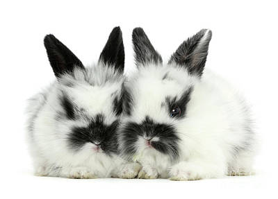 Photograph - Black-and-white Love Bunnies by Warren Photographic