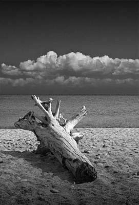 Photograph - Black And White Of Driftwood On The Beach At Whitefish Point In Michigan's Upper Peninsula by Randall Nyhof