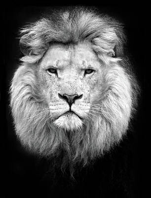 Photograph - Black And White Portrait Of A Lion by Focus on nature