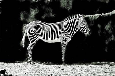 Music Figurative Potraits - Black and White Sketch of Zebra by Robert Frank Gabriel