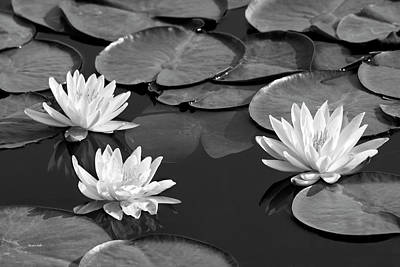 Photograph - Black And White Water Lilies by Christina Rollo