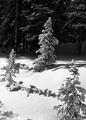 Photograph - Black And White Winter Snowy Trees by Cascade Colors