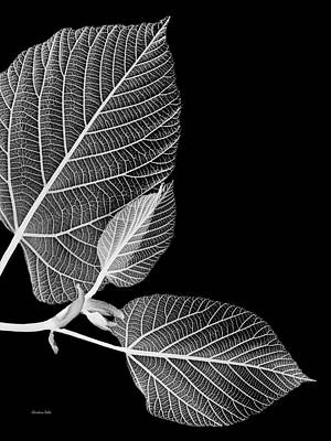 Photograph - Black And White X Ray Leaves  by Christina Rollo