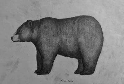 Drawings Royalty Free Images - Black Bear Royalty-Free Image by Michael Panno