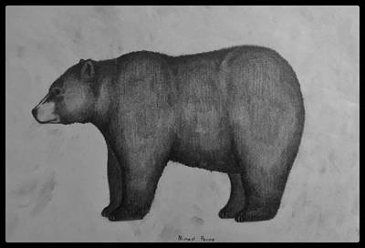 Animals Drawings - Black Bear W/ Border by Michael Panno