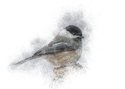 Photograph - Black-capped Chickadee Perch by Patti Deters