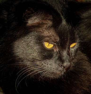 Photograph - Black Cat by Jean Noren