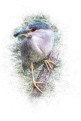 Photograph - Black Crowned Night Heron - Vertical by Patti Deters