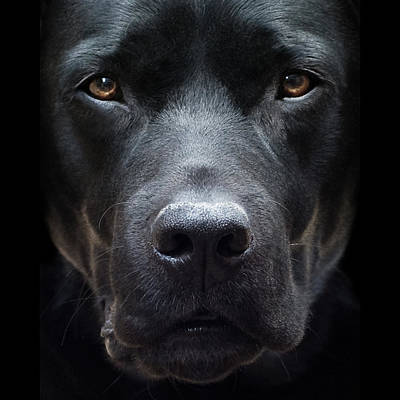 Photograph - Black Dog by Jody Trappe Photography