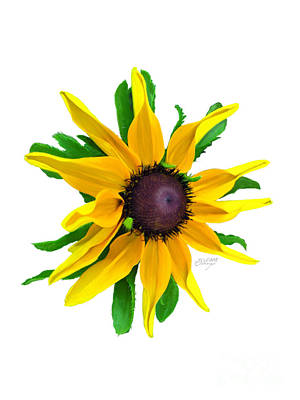 Photograph - Black-eyed Susan by Evelyn Odango