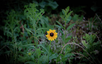Photograph - Black-eyed Susan by Lora J Wilson