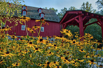 Art Print featuring the photograph Black Eyed Susans At The Jerusalem Mill by Mark Dodd
