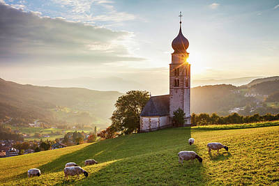 Photograph - Black Head Sheep Graze By A Church In Alps by Evgeni Dinev