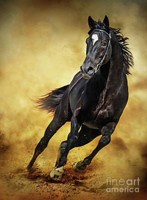 Photograph - Black Horse Running Wild by Dimitar Hristov