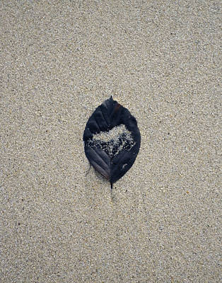 Photograph - Black Leaf On Sandy Beach by Richard Brookes