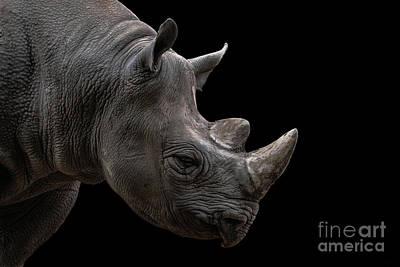 Rhinocerus Wall Art - Photograph - Black Rhino On Black Background by Lorenzo De Roo