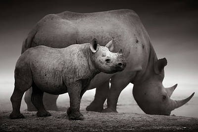 Black Rhinoceros Baby And Cow Art Print