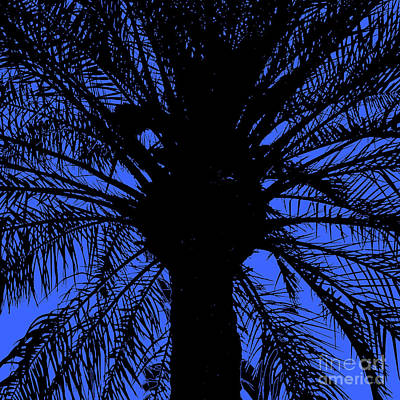 Easter Bunny - Black silhouette of a large palm tree in the back light, with dark blue background by Frank Heinz