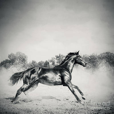 Photograph - Black Stallion Horse by Dimitar Hristov