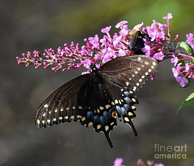 Tina Turner - Black Swallowtail and the Bee by Cindy Treger