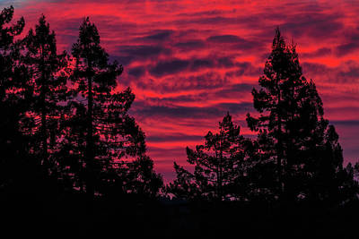 Photograph - Black Trees Against A Flaming Sky by Kathleen Bishop