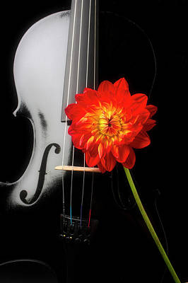 Photograph - Black Violin And Red Dahlia by Garry Gay