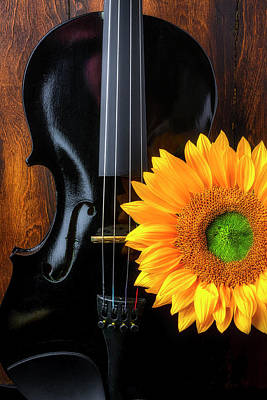 Photograph - Black Violin And Sunflower by Garry Gay