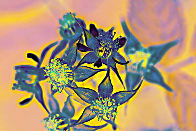 Digital Art - blackberry Flowers Blue and Orange by Ajp