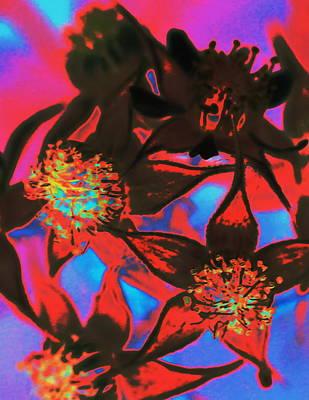 Digital Art - Blackberry Flowers Expressive Red by Ajp