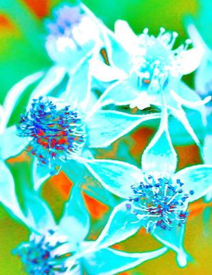 Digital Art - Blackberry Flowers Rainbow by Ajp