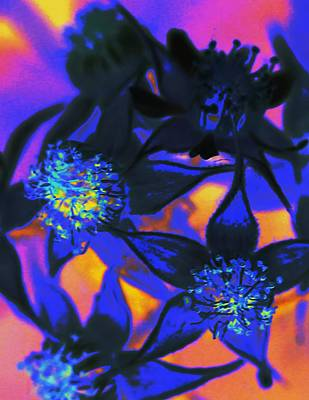 Blackberry Flowers Sunset Neon Art Print