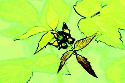 Digital Art - blackberry in Neon Green by Ajp