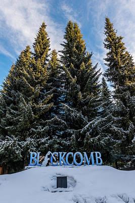 Photograph - Blackcomb Trees by TM Schultze