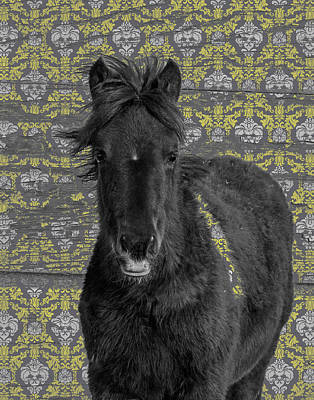 Photograph - Blackie by Mary Hone