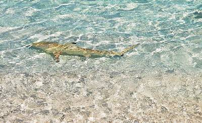Photograph - Blacktip Reef Shark In Sparkling Water by Jenny Rainbow