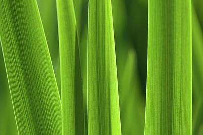 Photograph - Blades 8857 by Mark Shoolery