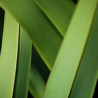 Photograph - Blades I by Mark Shoolery