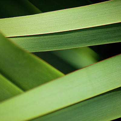 Photograph - Blades II by Mark Shoolery