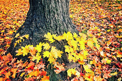 Photograph - Blanket Of Leaves by Scott Kemper