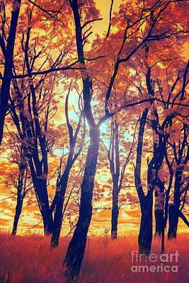 Photograph - Blazing Fall Colors In The Blue Ridge by Dan Carmichael